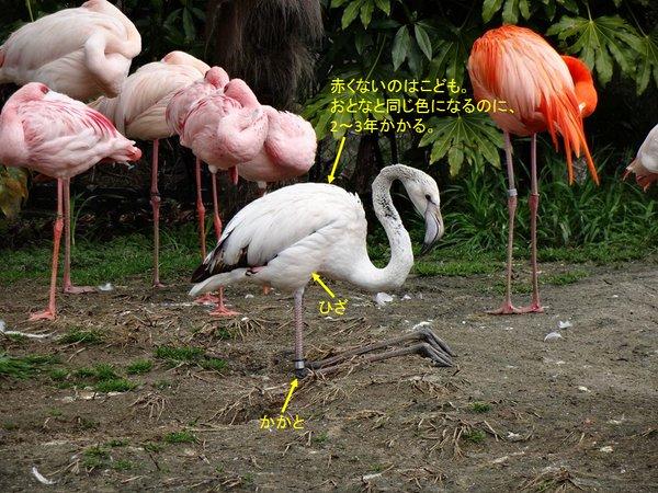 huramingo_kossetsu1