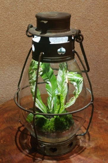 lamp_watertank13