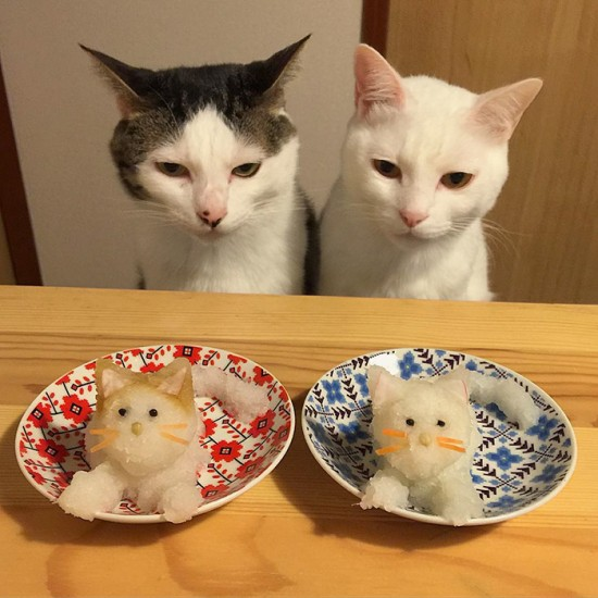 naomiuno_cat (10)