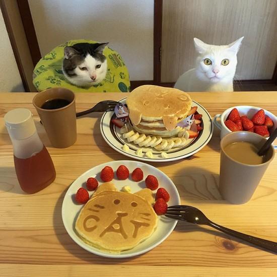 naomiuno_cat (11)