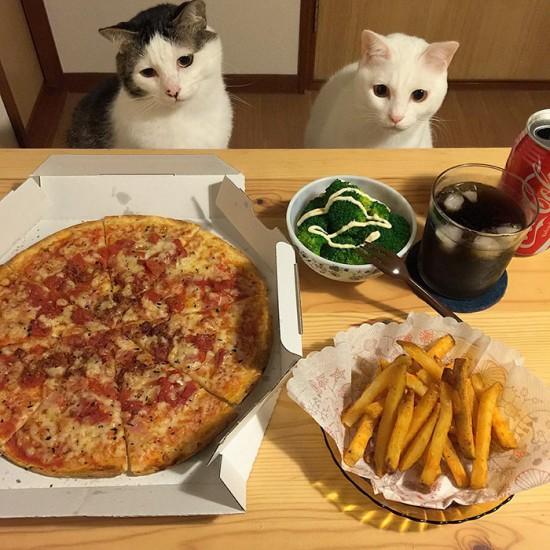 naomiuno_cat (12)