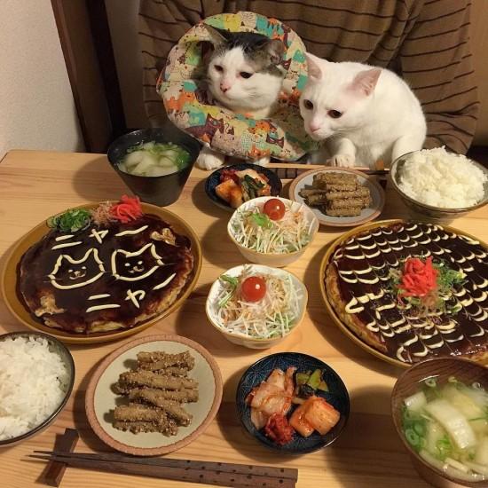 naomiuno_cat (14)