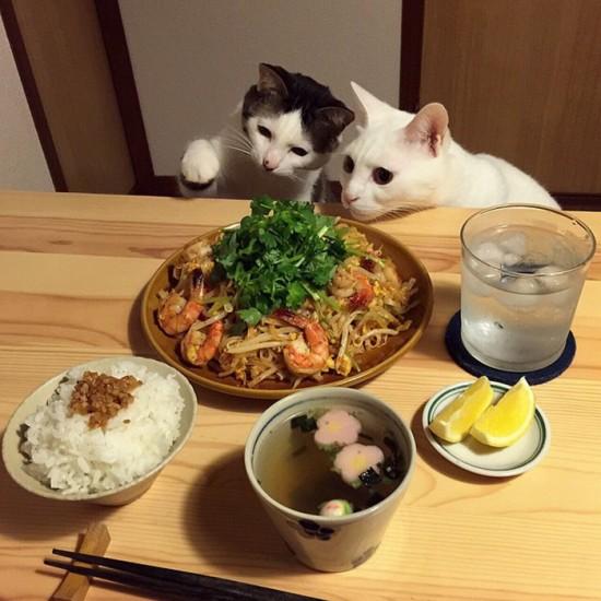 naomiuno_cat (2)