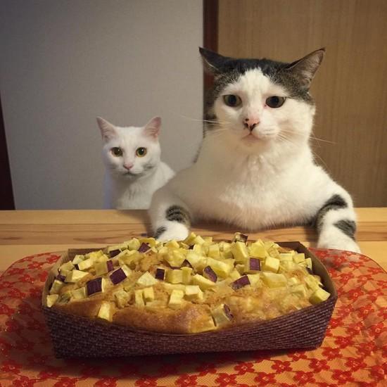 naomiuno_cat (3)