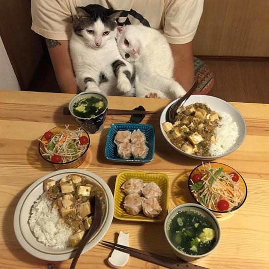naomiuno_cat (4)