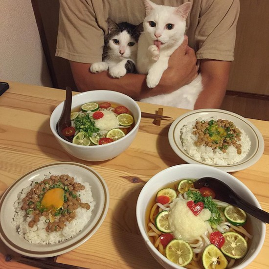 naomiuno_cat (5)