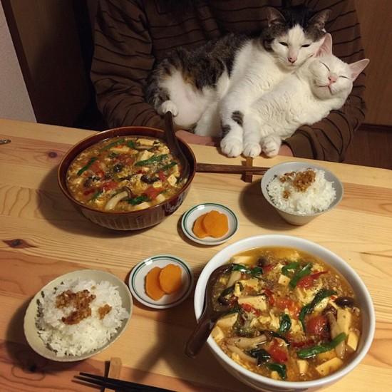 naomiuno_cat (7)