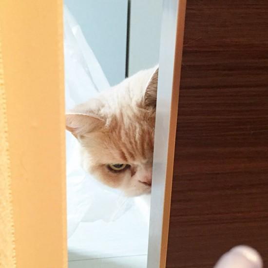 notangrycat (2)
