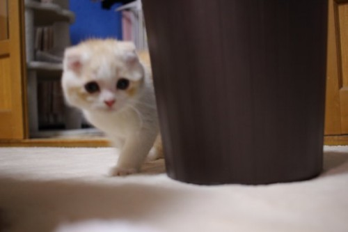 unagi_cat_10