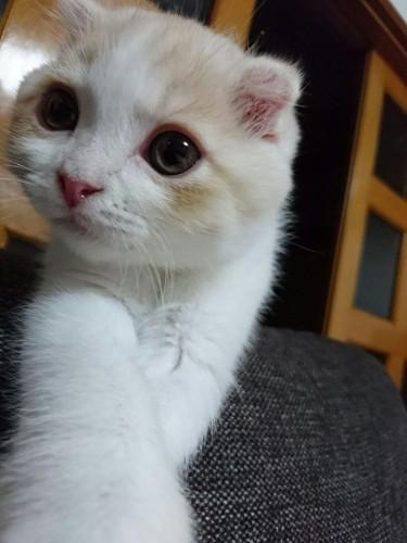 unagi_cat_12