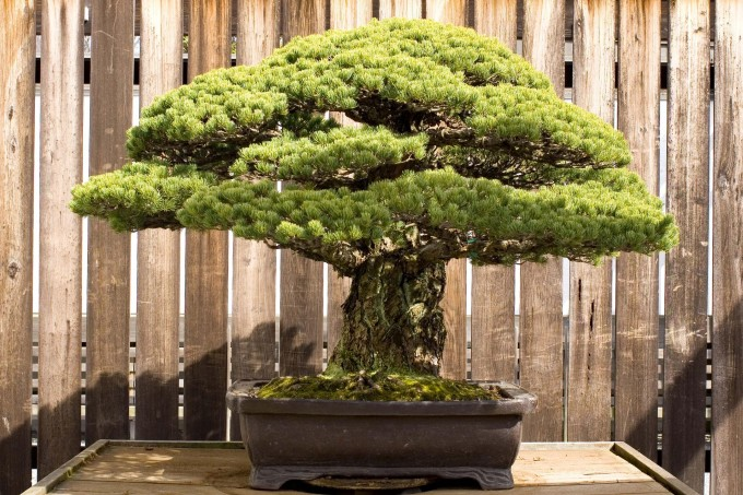 bonsai_unique (13)