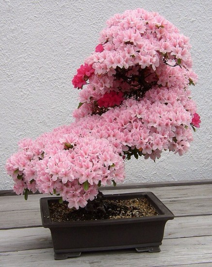 bonsai_unique (3)
