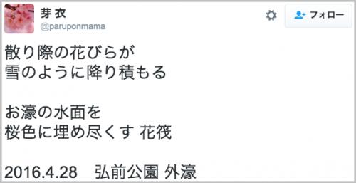 hirosaki_sakura20