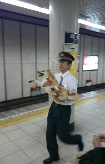inu_kaisatsu4