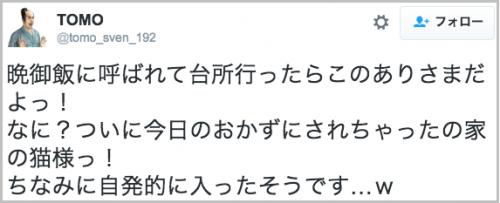 okazu_neko14