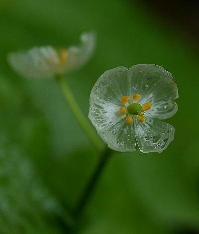 skelton_flower6