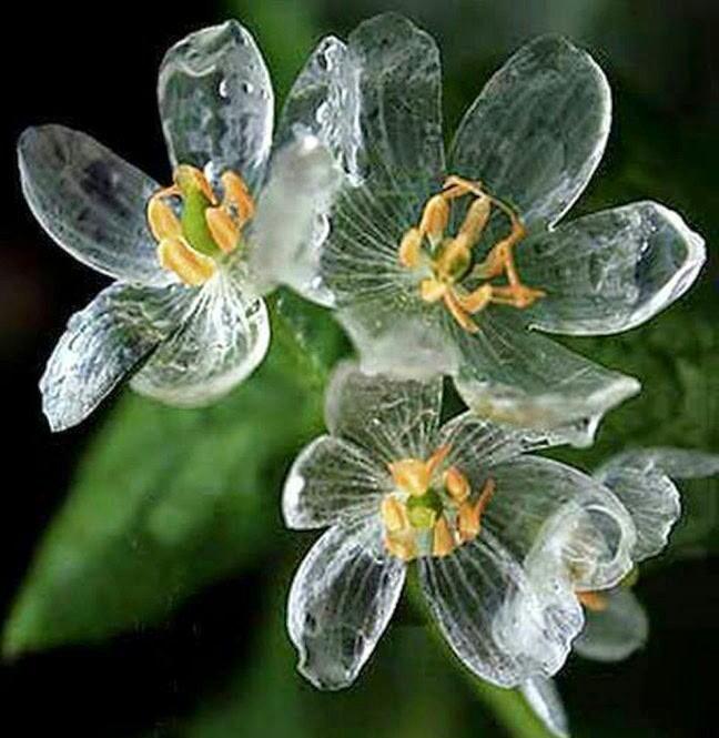 skelton_flower7