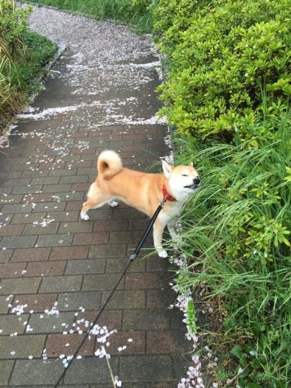tareodog (8)