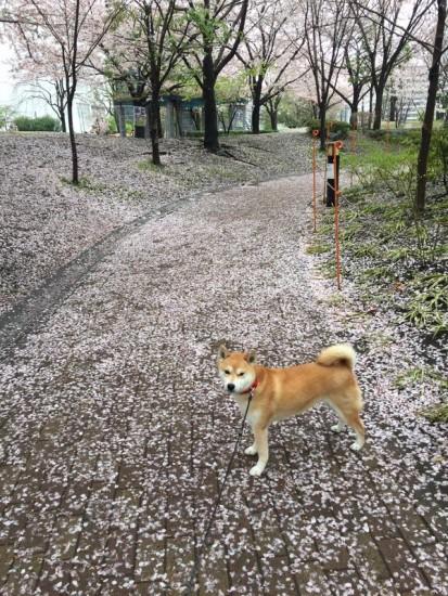 tareodog (9)