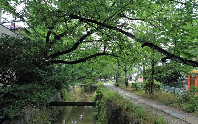 tetugakunomiti_sakura (2)