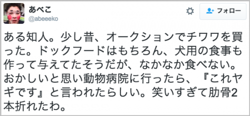 chiwawa_yagi20