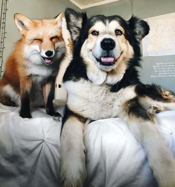 fox_bestfriend1
