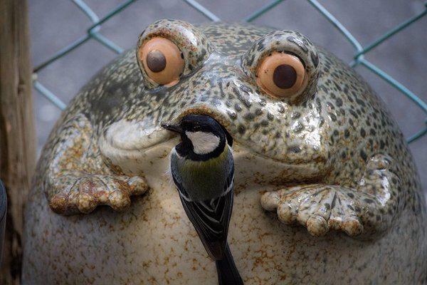 frogbird (1)