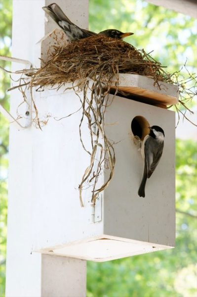 frogbird (13)