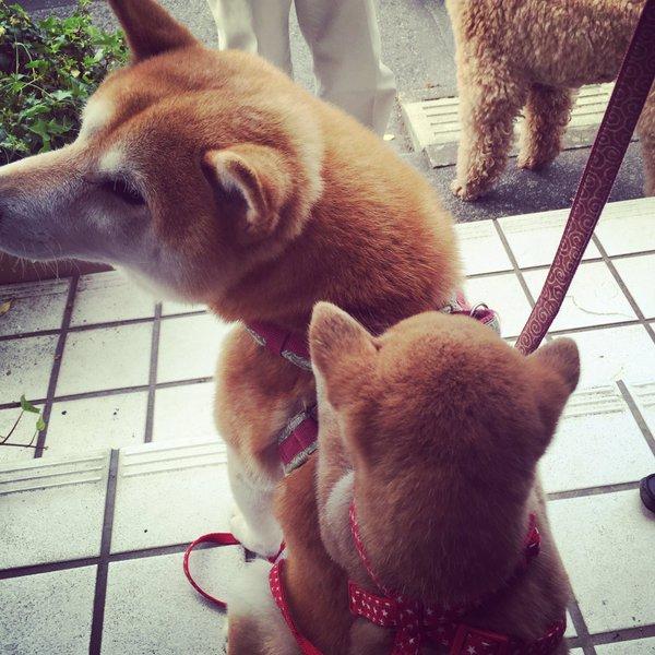 gohankudasai_inu16