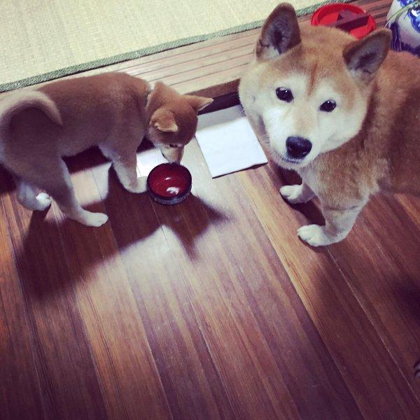 gohankudasai_inu5