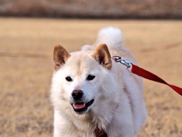 jishindog (5)