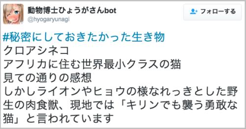 kuroashi_neko18