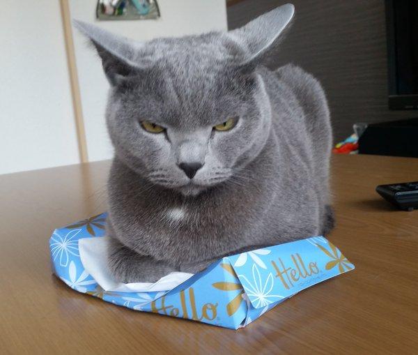 tissue_neko1