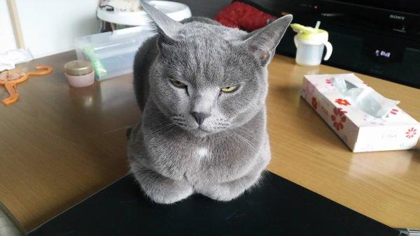 tissue_neko14
