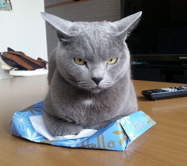 tissue_neko3