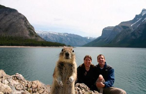 animals_selfies4