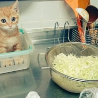 cat_cooking