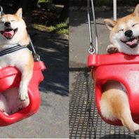 dog_swing0