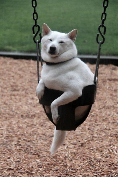dog_swing12