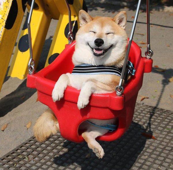 dog_swing2