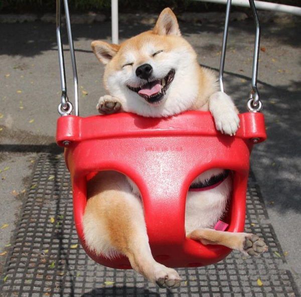 dog_swing3