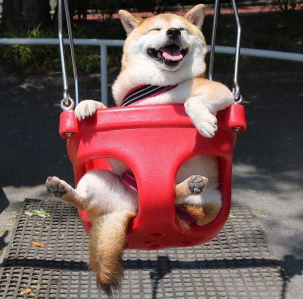 dog_swing4