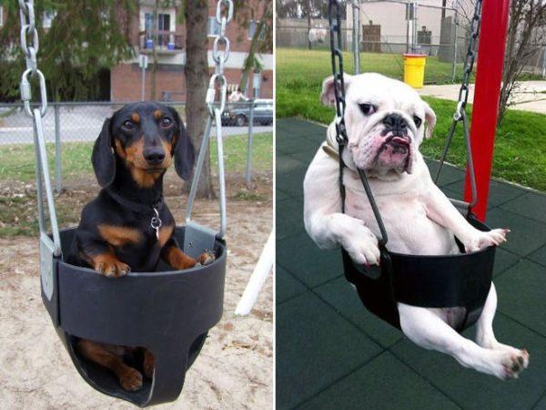 dog_swing5