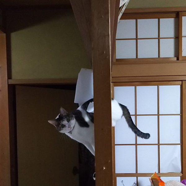 husuma_neko2
