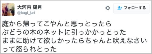 inu_amihikkakaru6