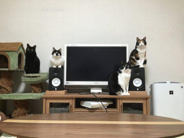 kamibassari_bikkuri8