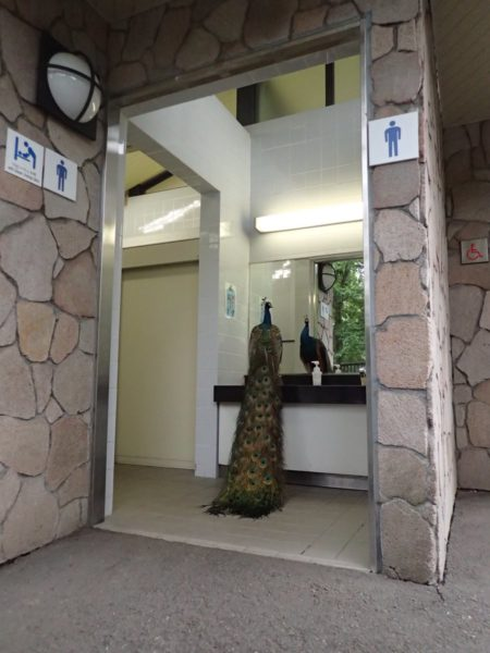kujaku_tamadobutsukoen1