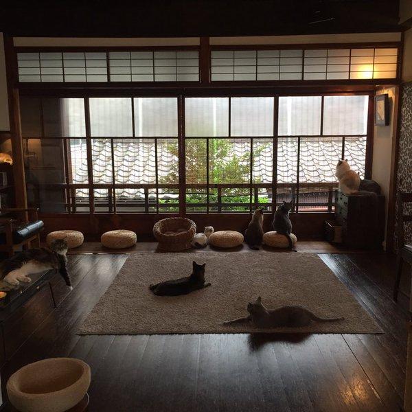 neko_yarukisogu14