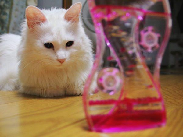 oilcat