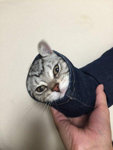 skynnycat_zetsubo1
